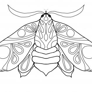 Mollige Motte als Ausmalbild