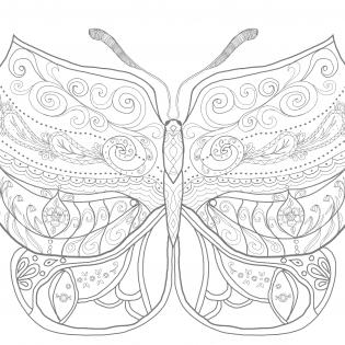 Schmetterling zum Ausmalen